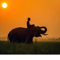 Африканские прогулки: веб-путешествие