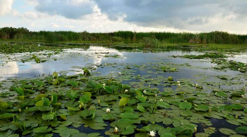 Дунайский биосферный заповедник (Вилково)